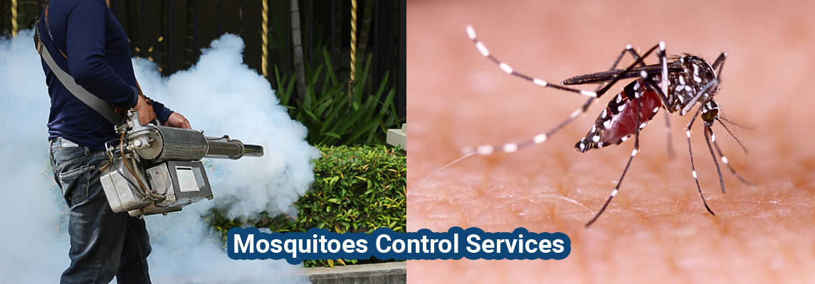 Mosquitoes Pest Control Service