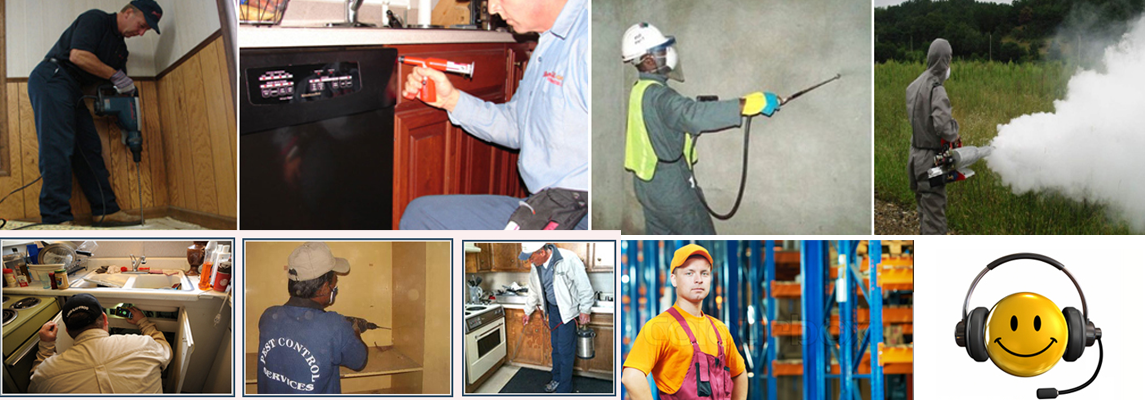 Pest Control Services in Noida